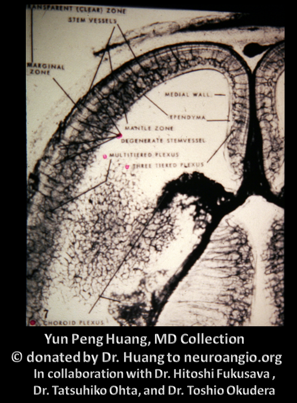 Yun Peng Huang Collection MVM DVA